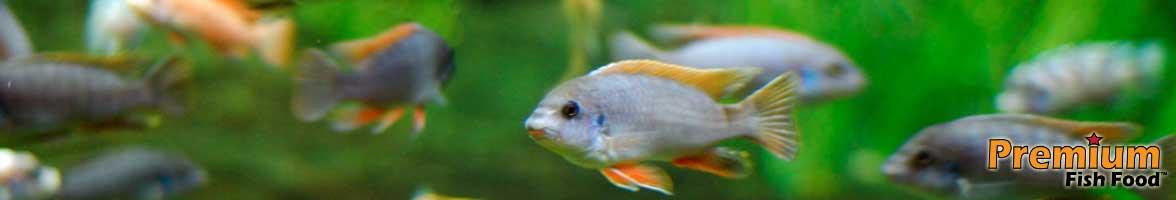 Cichlid fish food bulk